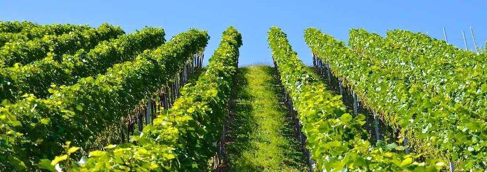 Comment acheter un vignoble à Saint-Tropez ?
